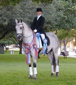 Andalusian Horse Trained By Joan