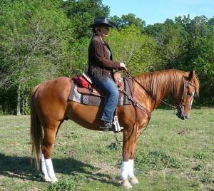 Sorrel Quarter Horse Learns Western Dressage