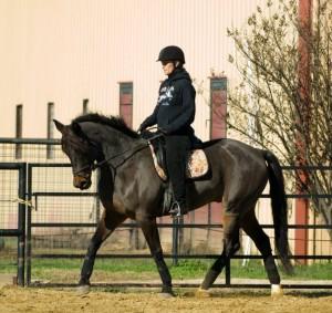 Horse performing Shoulder In